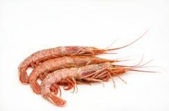 Shrimp Royalty Free Stock Images