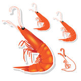 Shrimp vector Stock Images