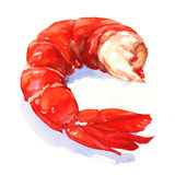 Shrimp. watercolor painting Royalty Free Stock Images
