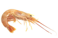 Shrimp on white Stock Photos