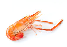 Shrimp  on white Royalty Free Stock Image