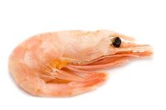 Shrimp on white royalty free stock photo