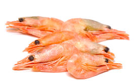 Shrimp on white background. Stock Photography