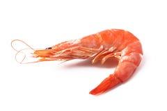 Shrimp  on white. Shrimp on a white background Royalty Free Stock Images