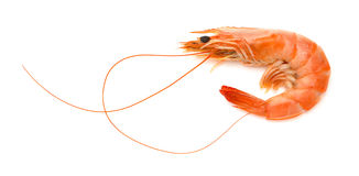 Shrimp on white background Royalty Free Stock Photography