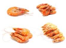 Shrimp on white background. Shrimp isolated on white background Royalty Free Stock Photos