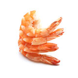 Shrimp on white background Royalty Free Stock Photos