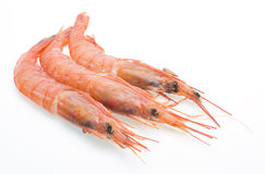 Shrimp in a white background Stock Photo