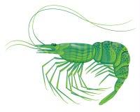 Shrimp  on white Stock Photography