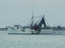 Shrimp Boat With Eating Birds. This is a shrimper surrounded by hundreds of seagulls eating fish scraps Royalty Free Stock Photos