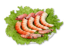 Shrimps. A few shrimps with greenery on a dish Stock Photos