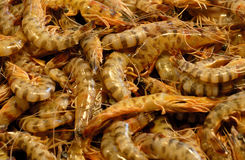 Shrimps. All Over the Picture Stock Photo