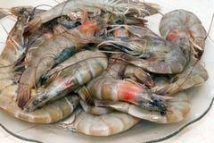 Shrimps. Fresh raw shrimps with sea shells royalty free stock photos