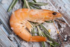 Shrimps. Raw shrimp with fresh rosemary Royalty Free Stock Photography