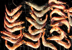 Shrimps. Many shrimps broiling on a bbq Stock Photo