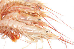 Shrimps Stock Image