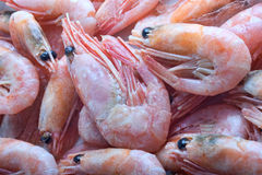 Shrimps. Can be used as background Stock Photography