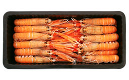 Shrimps. Fresh shrimps boxed for sale Stock Photography