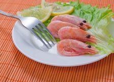 Shrimps. Green salad with shrimps on a plate stock photography