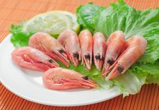Shrimps. Green salad with shrimps on a plate stock images