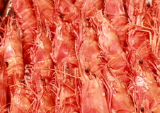 Shrimps. Planty of orange shrimps on market Royalty Free Stock Images