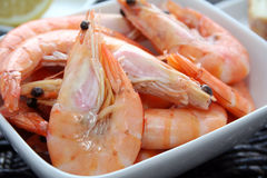 Shrimps. Some fresh shrimps on a plate royalty free stock photography