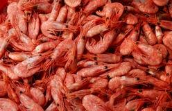 Free Shrimps Stock Photography - 61283782