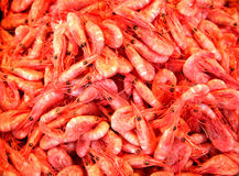 Shrimps Royalty Free Stock Photos