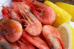 Shrimps. Prepared shrimps ready for the meal Stock Images