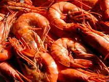 Shrimps. Macro Stock Photo