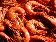 Shrimps. Macro stock photo
