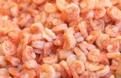 Shrimps background Stock Image