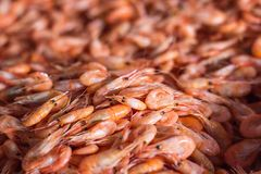 Shrimps background texture. A lot of sea shrimp or pattern of krill. Sea food like shrimp or krill on the street food festival. St. Eaming prawns. Shot with a Royalty Free Stock Photography