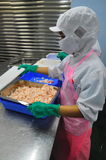 Shrimps are being peeled and ready to be steamed in a seafood factory Stock Photography