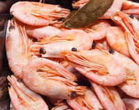 Shrimps on black Stock Photo