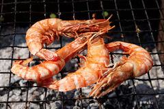 Shrimps on charcoal grill, outdoor picnic. Strong sunlight Stock Photo