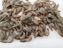 Shrimps chilled on ice Stock Images