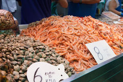 Shrimps and clams for selling at fish market. Raw and fresh shellfish and shrimps with price on boards Stock Photography