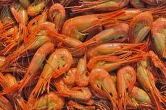 Shrimps 5 Stock Photos