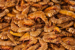 Shrimps close up Royalty Free Stock Photo