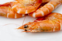 Shrimps close up. Close up of some shrimps on a white plate royalty free stock photos