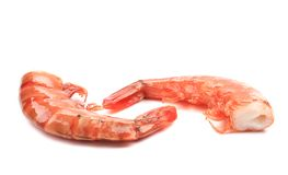 Shrimps close up on white. Stock Photos