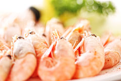 Shrimps closeup Stock Images
