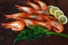 Shrimps closeup with lemon and dill on a dark background Stock Image