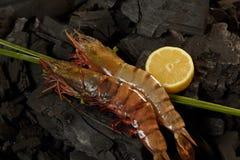 Shrimps Stock Photos
