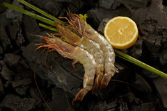 Shrimps. On coals ready for cooking with some herbs and a pies of lemon Royalty Free Stock Images