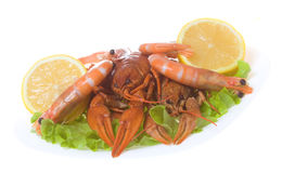 Shrimps and crayfish with green salad Stock Photos