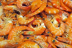 Shrimps in the fish market Stock Images