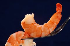 Shrimps on fork. Two big cooked shrimps on a fork in front of dark blue background Royalty Free Stock Photos