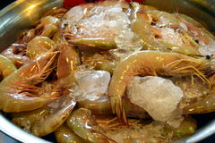 Shrimps. Fresh shrimps in the market of Pattaya Royalty Free Stock Photography